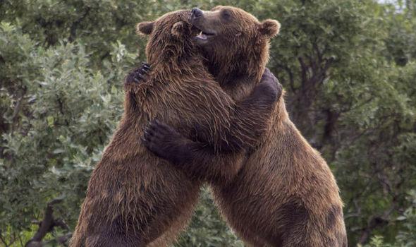 Bear-hug-651143